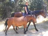 Glencoe Social Trail Riding Club