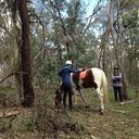 Gingi being a horse Robin and Narelle ponder