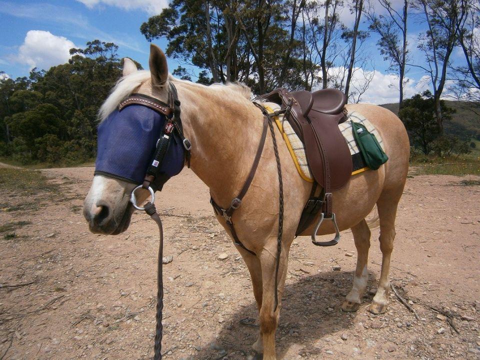 23 Mmmm new saddle