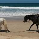 beach ride 008 (700x286)