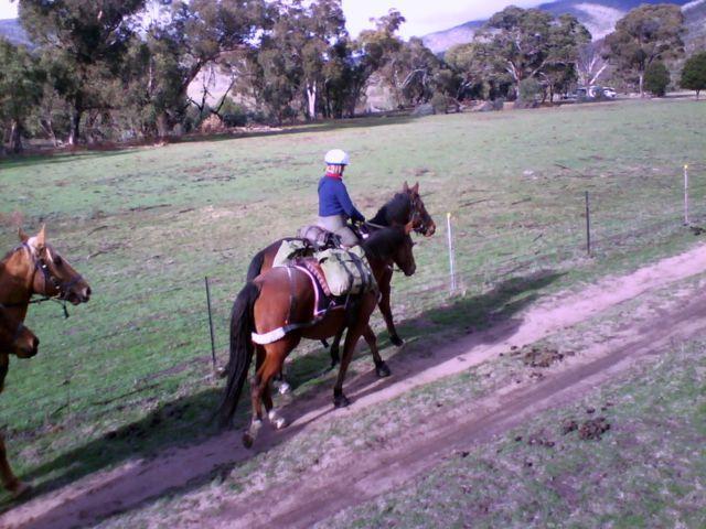 Caloola farm, packhorse training June long weekend 2009.