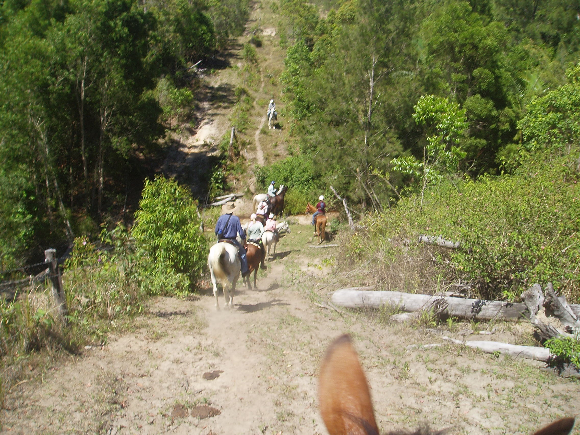 Trailriders negotiating a steep hill during the local Teemburra Dam trailride