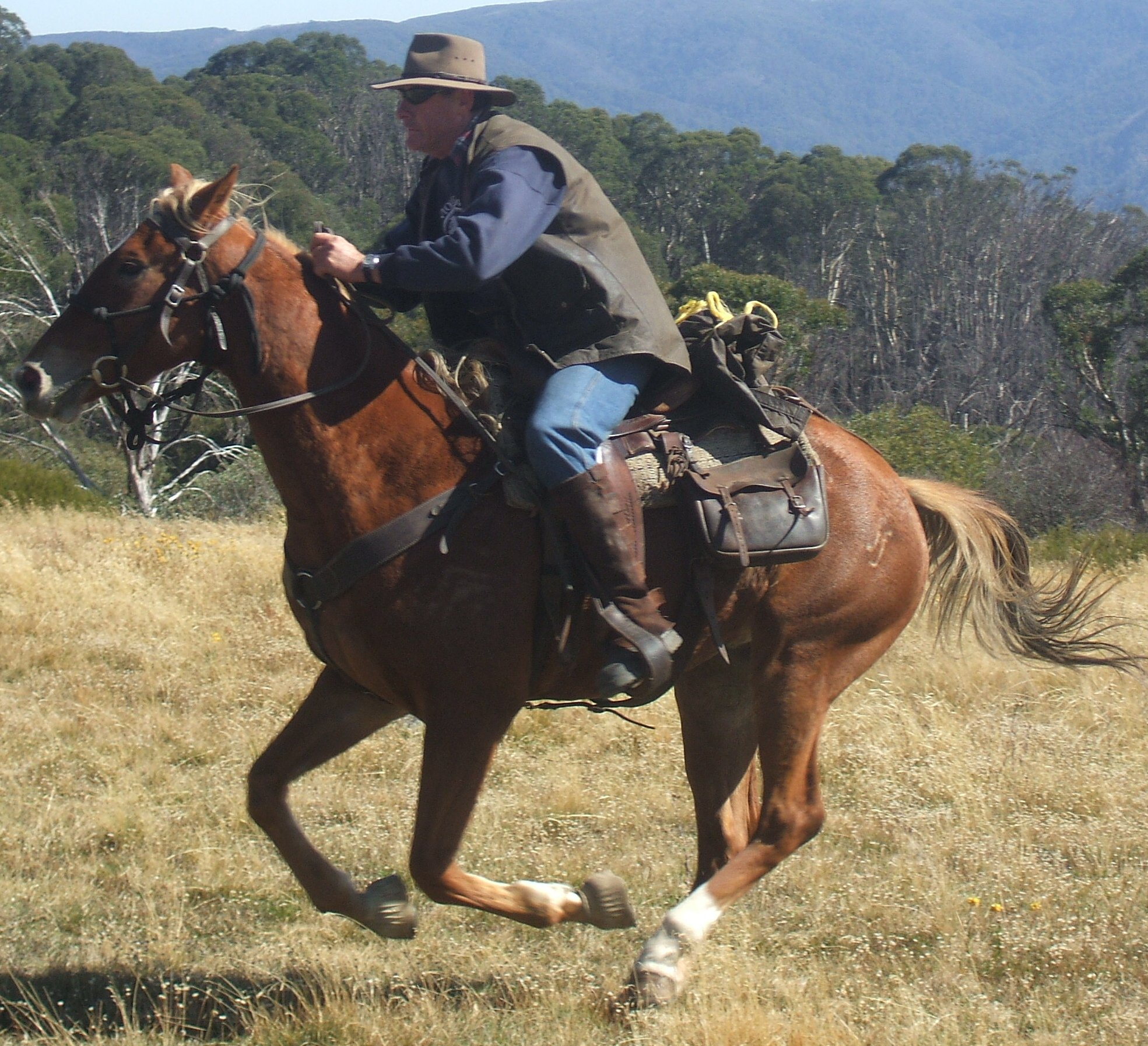 Go Jeff go - taking on The Man From Snowy River @ Crag's Hut
