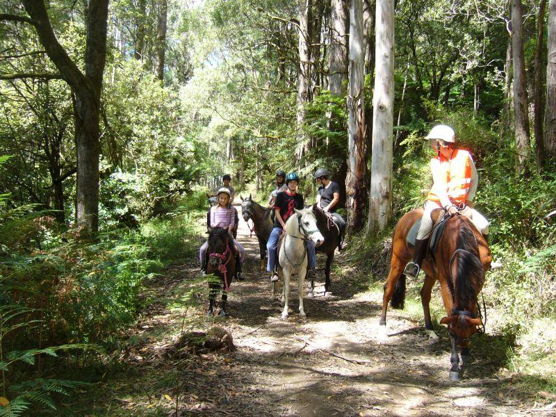 Haydens track in Forrest